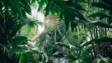 Zertifikate Dschungel für nachhaltige Reisen